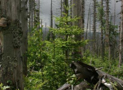 Šumavě hrozí katastrofa tisíciletí, děsí se Stráský