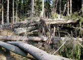 Mizerná dřevěná kniha. Pomáhá podnikatelům, ne lesům, tvrdí expert