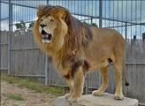Halloween v Zoo Tábor: strašidelné dýně pro lvy, pumy, malpy i nosály