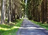 Spalování biomasy může mít negativní vliv na přírodu, varovala Evropská agentura pro životní prostředí