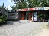 V Zoo Liberec jsou k vidění červnová mláďata – dvě zebry a osel
