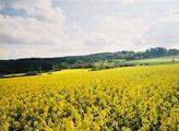 Robert Břešťan: Žlutá je barva naše. Česká republika je celoevropsky na špici v pěstování řepky