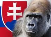 Gorila, respektive Penta ohrožuje i novou slovenskou vládu