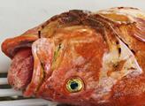 Na Aljašce se loví mnoho druhů ryb