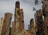 Zkamenělé stromy