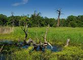 Koalice proti palmovému oleji: Odborné společnosti požadují důslednou ochranu Moravské Amazonie