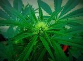 Na drogy nesahejte, řekl vládě Ústavní soud