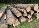 Lesy ČR: Krádeže vánočních stromků nebo jmelí se rozhodně nevyplatí