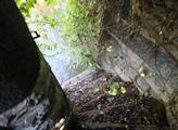 Zarostlé schůdky z Werichovy zahrady k Čertovce