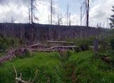 Hnutí Duha: Sněmovno, tlumíme dopady lesní krize, vy řešte příčiny