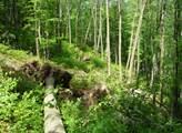 Úřady: Vojenské lesy si budou moci nechat lesy u Vrbětic zdarma