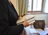 Na křečka! Petice za dostavbu dvojice dálnic na Moravě předána senátorům. Doprovodili ji plyšoví hlodavci