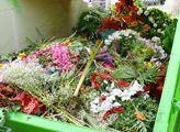 Svaz květinářů a floristů: Z květin se stal odpad, pěstitelé a prodejci přicházejí denně o miliony