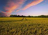 Zemědělský svaz: Investiční plán je jen marketingový tah, nikoli opravdová strategie