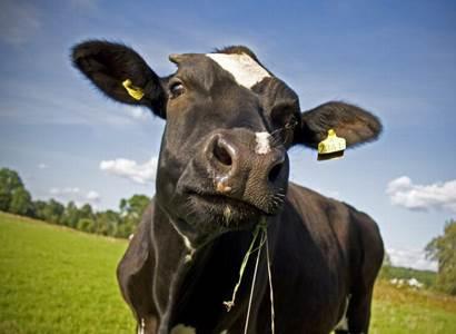 Měřit prdění krav. Někteří europoslanci se prý už do Zeleného údělu normálně zbláznili. Hovoří jejich kolega, který to pozná