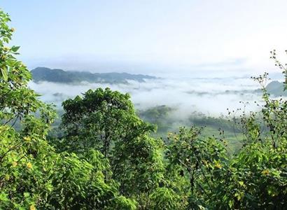 Petice: Pomozte zachránit Amazonský deštný prales