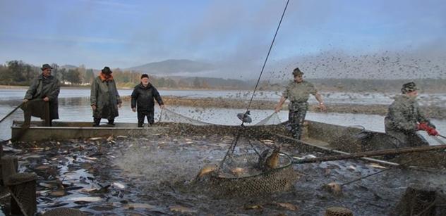 Vojenské lesy a statky zvou opět na sváteční výlov horského rybníku na Šumavě