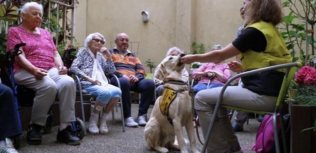 Praha 5: Léčení psí láskou v Domě sociálních služeb Na Neklance
