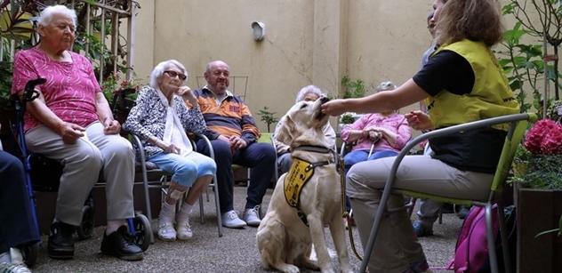 Petr Lachnit: Význam canisterapie v sociálních službách
