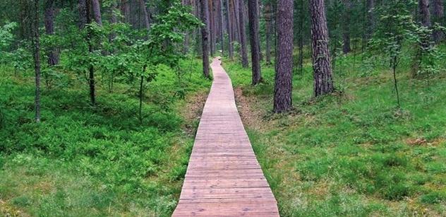 Stav českých lesů devastovaných kůrovcem? V ČT promluvili odborníci