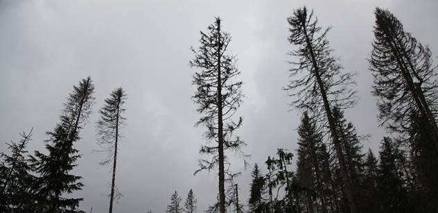 Kvůli teplé zimě zintenzivnili šumavští lesníci kontroly vlesích, o které pečují