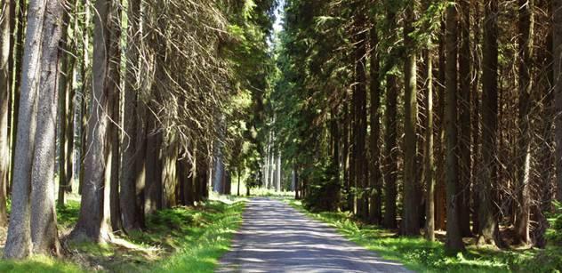 Vracení lesů církvím začalo. Na Karlovarsku