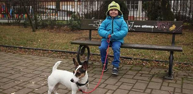 Veterináři v Brně denně čipují desítky psů, zájem vrcholí