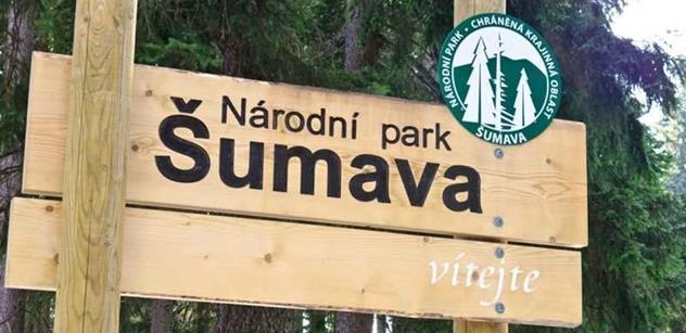 Národní park Šumava: Objevuje se vlk. Loni ho zachytily fotopasti na velké části území