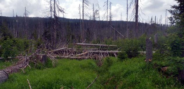 Katastrofa na Šumavě: Stromy řeší veterinář. Zkušený lesník ví, kdo může za sucho v Čechách