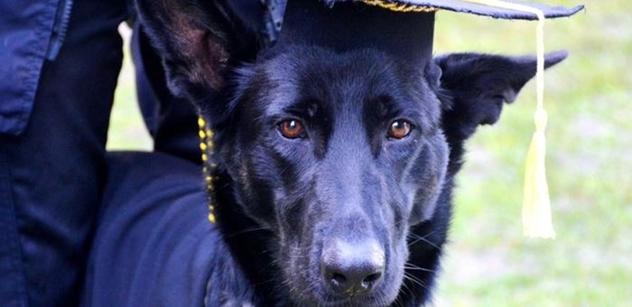 Praha 5: Radní Lachnit převzal záštitu nad promocí asistenčních a vodících psů Helppes