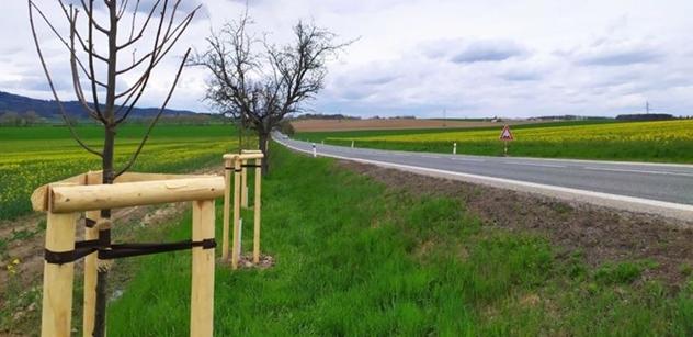 V Jihočeském kraji pokračuje náhradní výsadba stromů