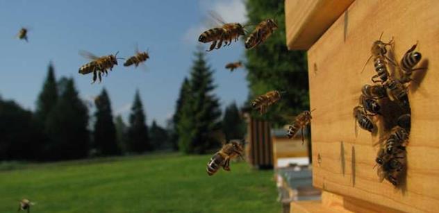 Na krajském úřadu v Liberci se zabydlí živé včely