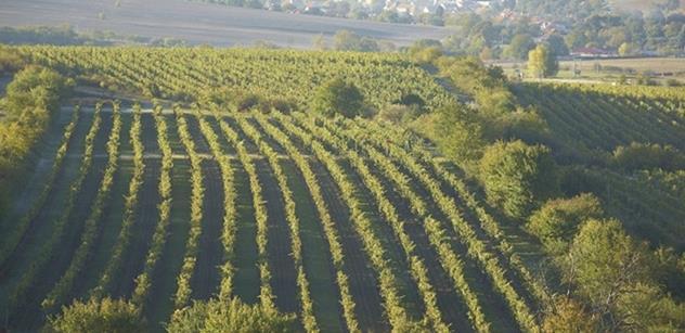 O vinobraní vyrazte za víny na znojemskou vyhlídku u rotundy svaté Kateřiny. Akci podporuje Jihomoravský kraj