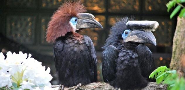 Zoo Liberec chová nový druh zoborožců