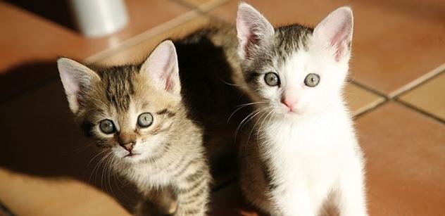 Petice za povinnou identifikaci a registraci koček
