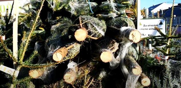 Při prodeji vánočních stromků mě neokradou, traduje se. Omyl. Odhalíme nejběžnější trik, o němž jste nikdy neslyšeli a který je rozšířený hlavně v Praze