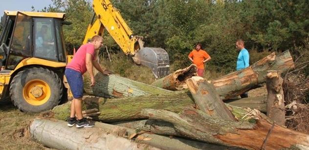 Česká krajina: Kmeny dubů vytvořily v rezervaci velkých kopytníků nový biotop pro ohrožené brouky a včely samotářky