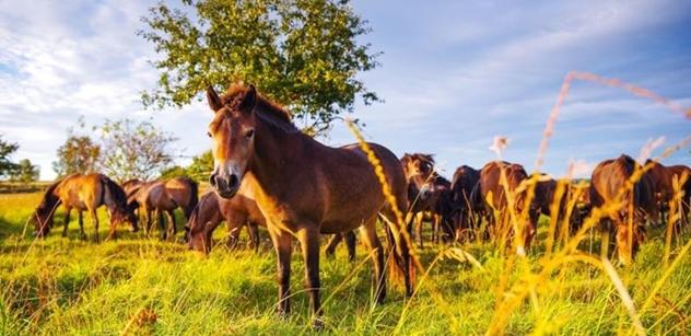 Česká krajina: Lidé darovali dva miliony na dokončení rezervace divokých koní, k záchraně chybí poslední podpis