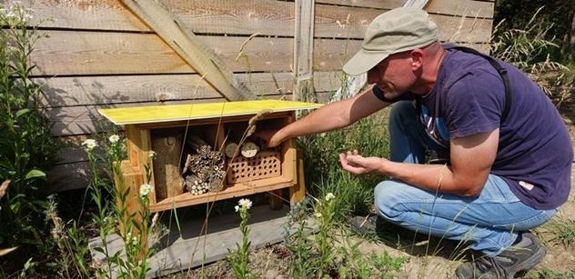 Česká krajina: Do rezervace se vracejí divoké včely, pomáhají jim i hmyzí hotely
