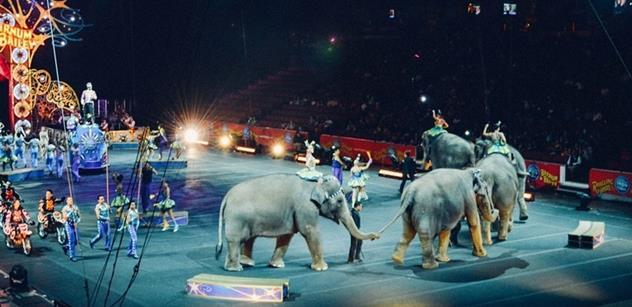 8a21d4a4c09 Ochránci zvířat  V cirkusech je na zvířata nahlíženo jako na nástroje zisku  a je s