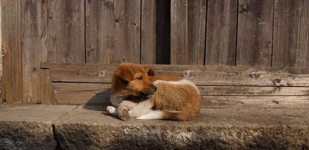 Obránci zvířat: V pořádku! Tak zní verdikt veterinární správy k další množírně psů