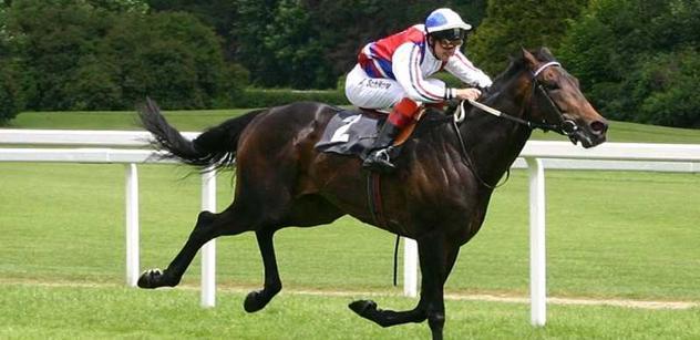 Známému umělci umřeli dva koně. A naštval se na vládu Polska