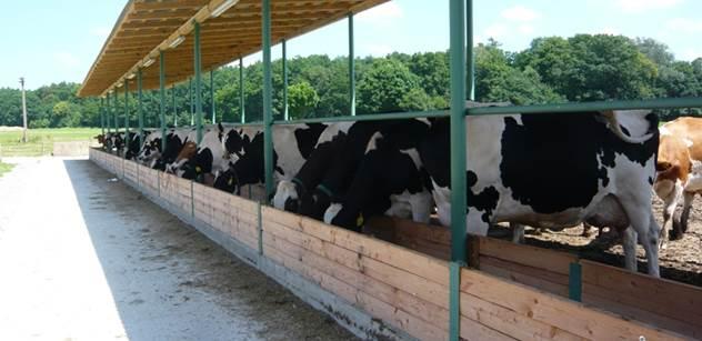 """Téměř polovina vysoce kvalitního českého mléka míří do Německa. Otřesné svědectví zemědělce, jak se do Evropy """"doplazil"""""""