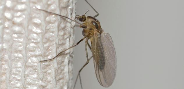 Virus zika je už i v Česku