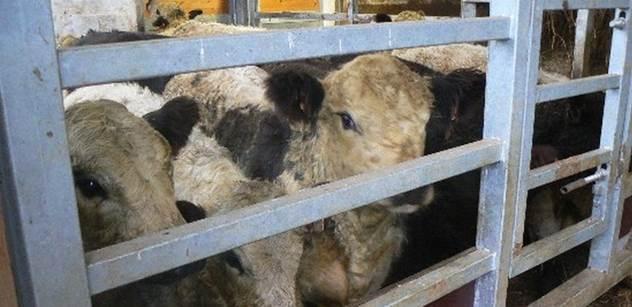 Miliony hospodářských zvířat trpí!