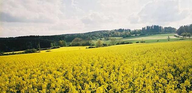 Úroda obilovin a řepky bude dobrá, výnosy nepřekonají loňský rekordní rok