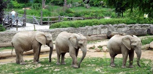 ZOO Zlín: Budoucnost, to jsou sloni a oblast Karibuni