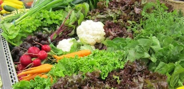Markéta Mazancová: Skleníkům na Moravě se daří. Proč jich nemáme víc a musíme zeleninu dovážet?