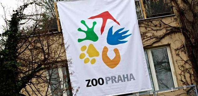 Zoo Praha: Úhoří rekordman prožil ve studni 155 let. Nebo ne?