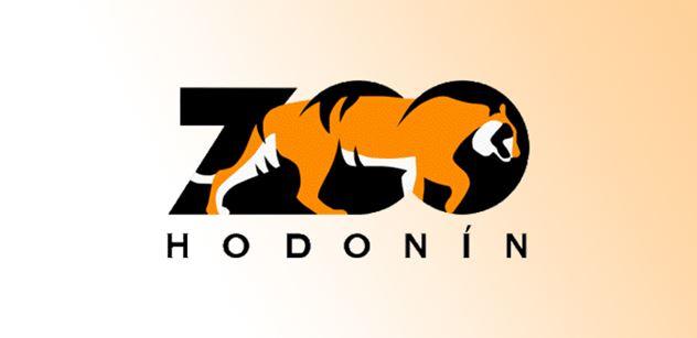 Zoo Hodonín: Tamarín sedlový – nový druh v pavilonu opic